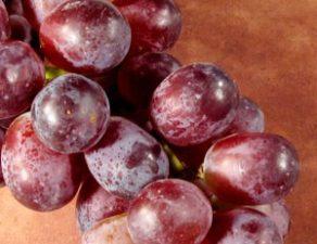 vino-y-flora-intestinal